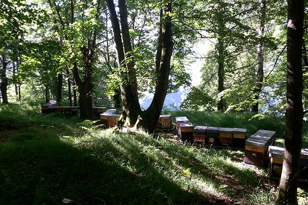 Miele Biologico Lago di Como rett
