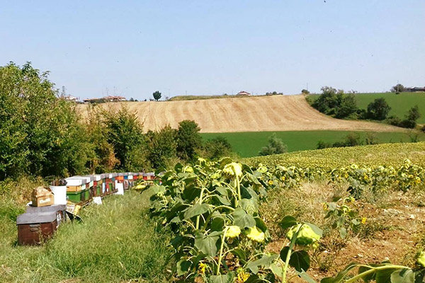 Miele Biologico Toscana rett